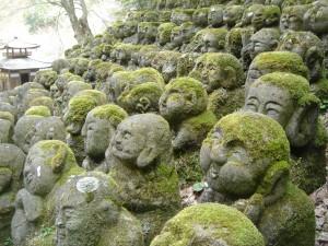 Gathering Moss?
